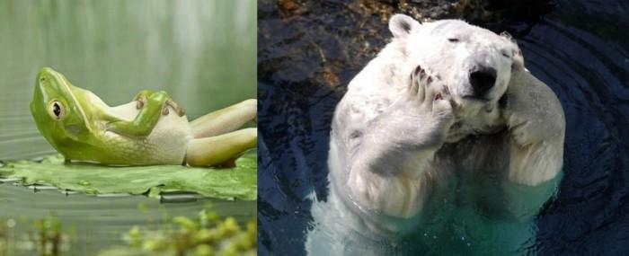 지친 개구리와 북극곰